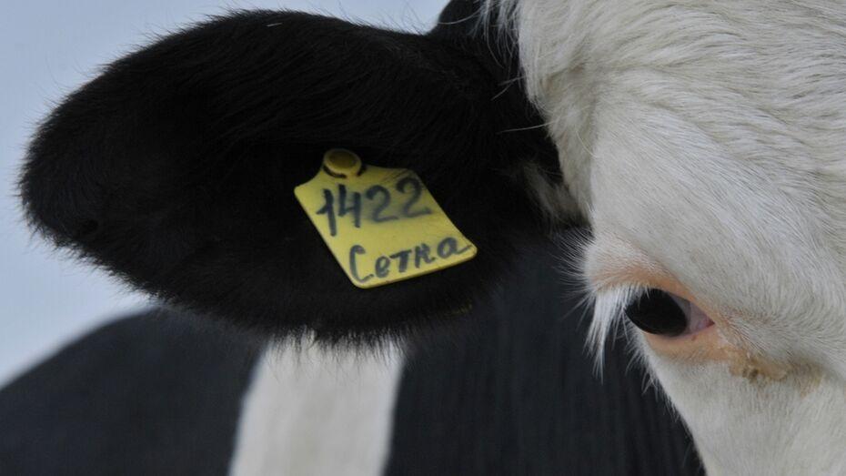 Воронежская область получит 62 млн рублей на развитие животноводства