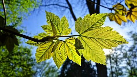 Для озеленения Воронежа в 2021 году запланировали высадить 1,3 тыс деревьев