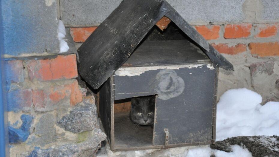 В павловском селе дворовый пес приютил в своей будке бездомного кота