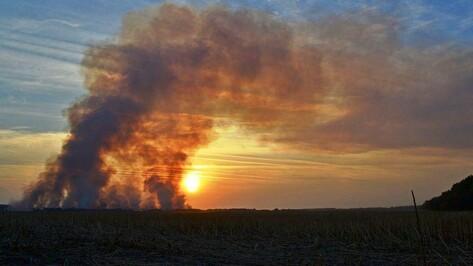 В поселке Красный Маяк Грибановского района выгорел пустырь