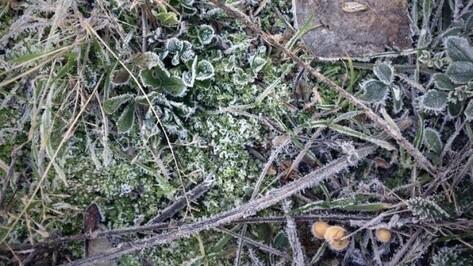 Спасатели сообщили о заморозках в Воронежской области 3 октября