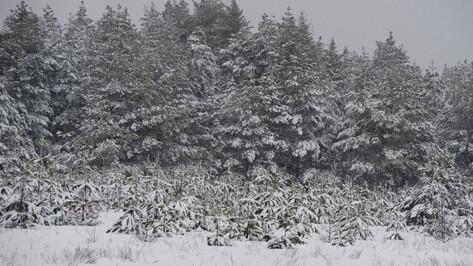 Украшение и защита земли. Как и зачем восстанавливают воронежские леса
