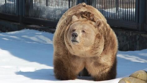 Из-за теплого декабря в Воронежском зоопарке проснулись медведи