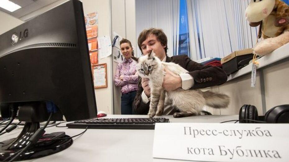 В Свердловской области появился кот-политик