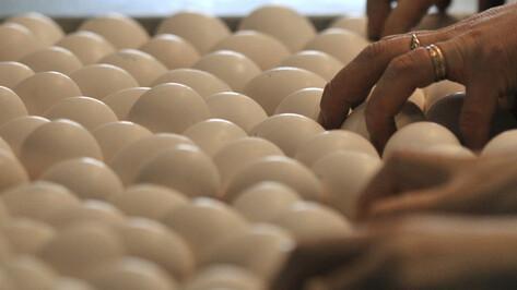 В Воронежской области построят комплекс по производству куриных яиц и комбикормов