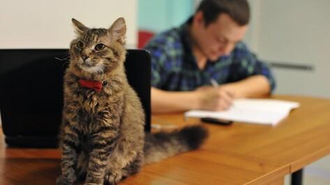 В воронежском кошачьем кафе отметили первый «выпускной»