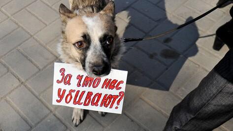 Воронежский приют для бездомных животных спроектируют в 2017 году