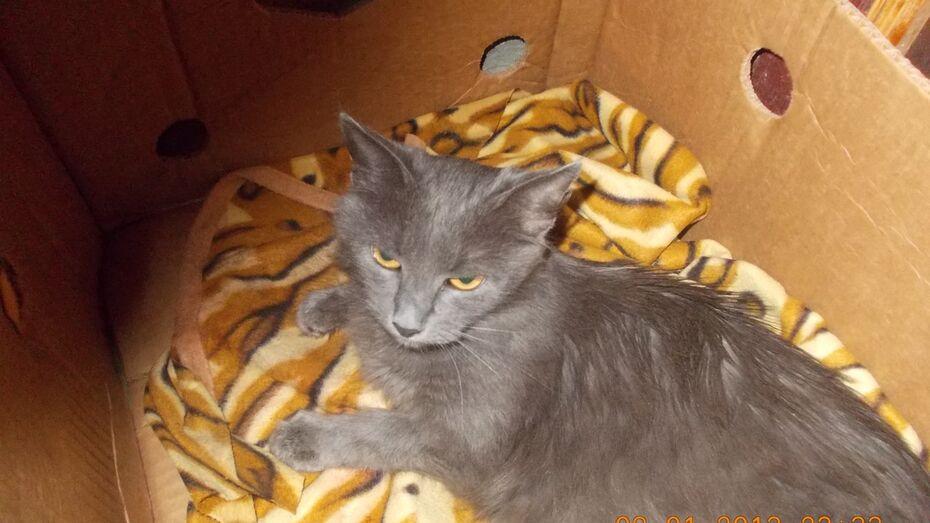В Воронеже выхаживают кошку, хозяева которой сгорели 9 марта в Березовой роще