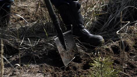 Артель из Воронежской области оштрафовали за порчу земель