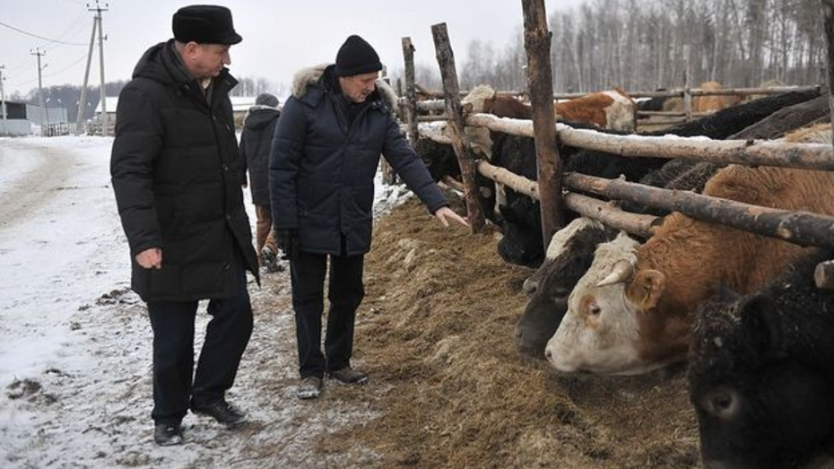 В Воронежской области развивается племенное животноводство