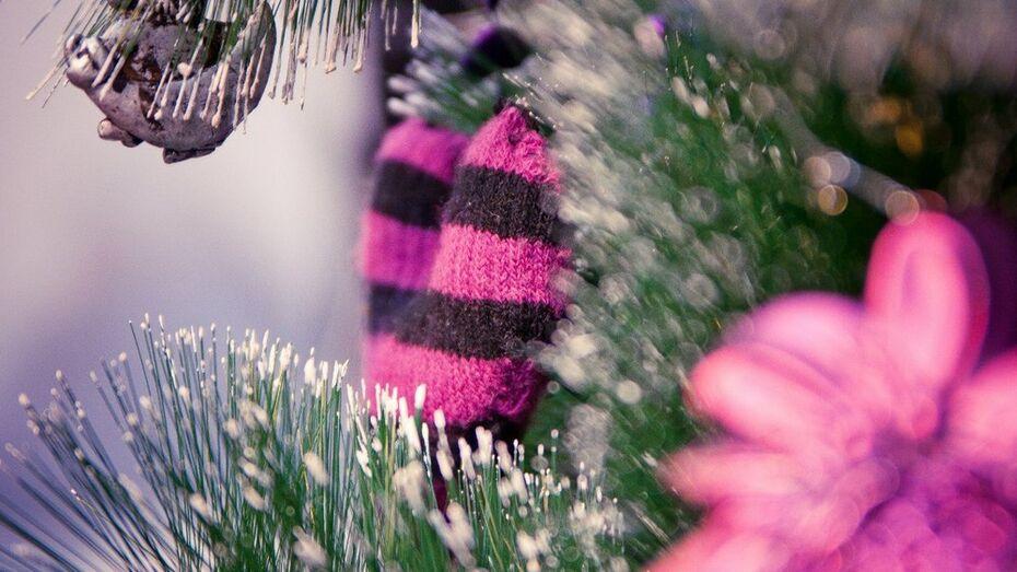 В Воронеже перед Новым годом откроются 174 елочных базара