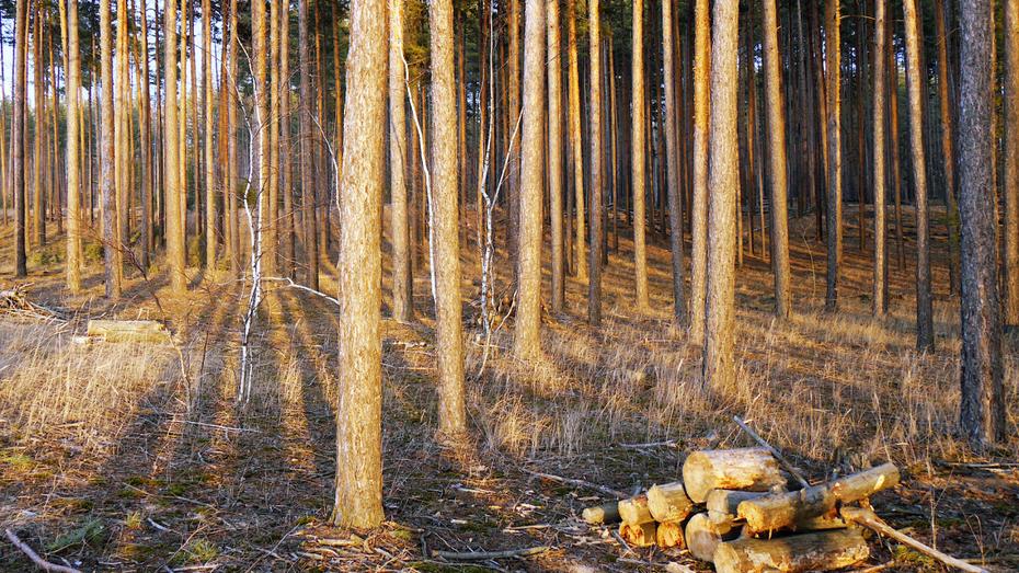 Ученые изучат зеленый пояс Воронежа