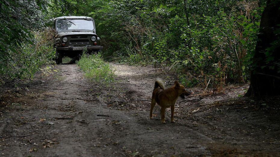 Воронежские власти объявили карантин по бешенству животных в Советском районе