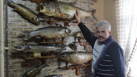 Рыба на полке. Зачем житель Воронежской области делает чучела из обитателей Битюга