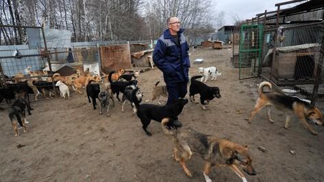 Из «Пусть говорят» вырезали спор воронежского зоозащитника с депутатом Госдумы