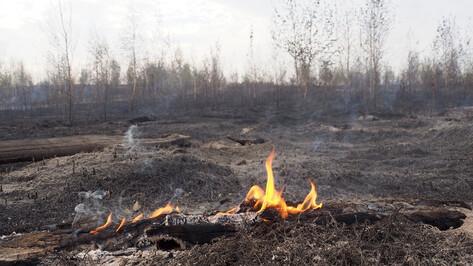 В Воронежской области начался сезон ландшафтных пожаров