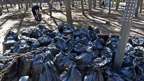 Воронежцев пригласили на субботник в Шиловском лесу