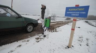 Воронежский Россельхознадзор задержал 19 т белгородской свинины