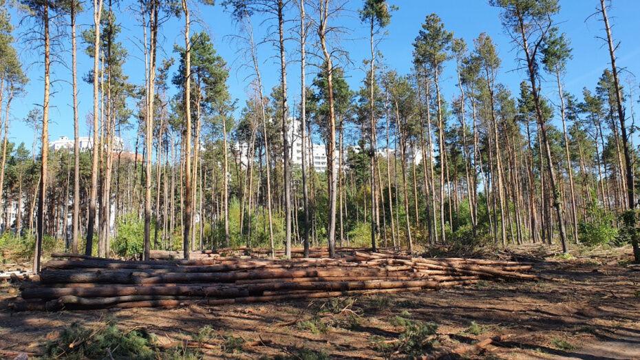 Сгорели около 2 га Северного леса в Воронеже