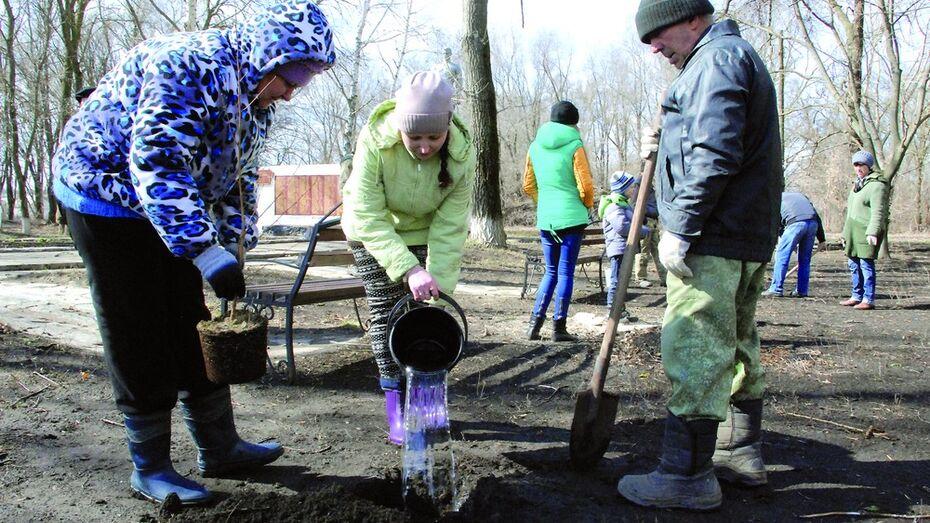 В Кантемировском районе посадили первые саженцы «Леса Победы»