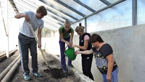 Кантемировским школьникам восстановят теплицу