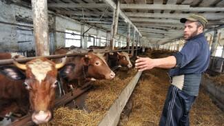 Губернатор призвал воронежских фермеров заявить о себе на мировом рынке