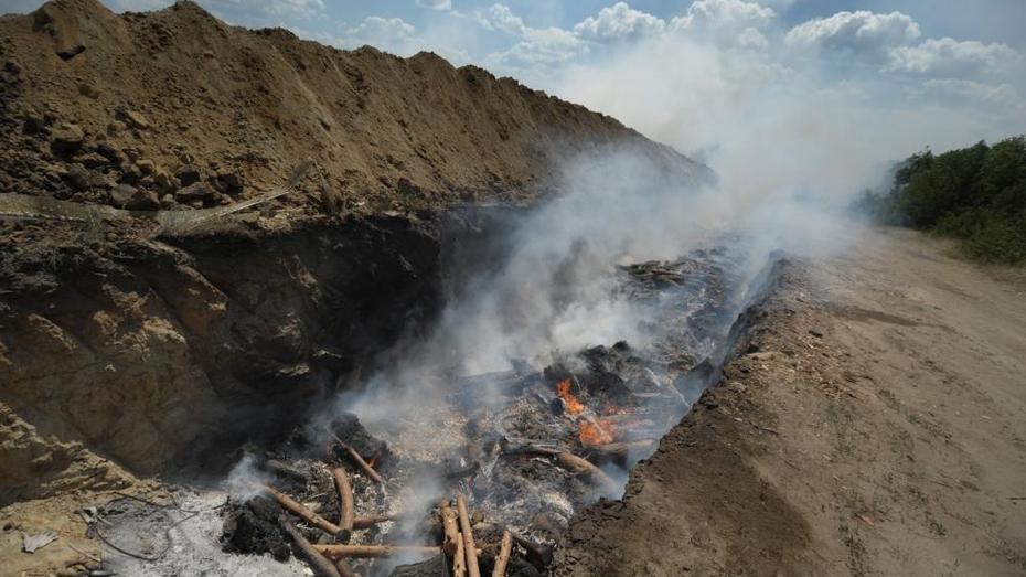 В Воронежской области уничтожат 34 тыс свиней из-за АЧС