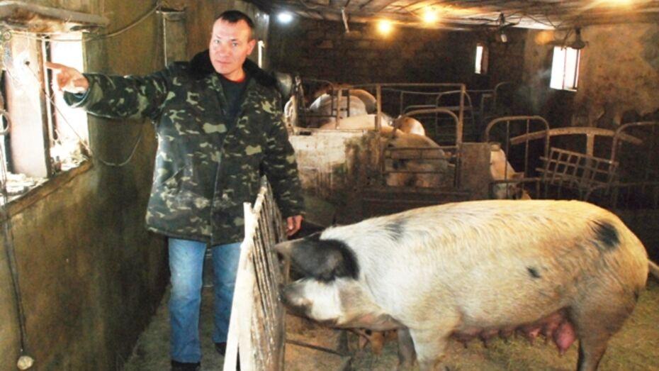 Фермер из Кантемировского района оборудовал свинарник камерой видеонаблюдения