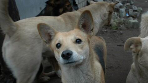 Число бешеных животных в Воронежской области выросло на 17% за год