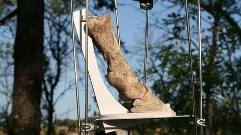 В воронежском Дивногорье появится интерактивный павильон о древних лошадях