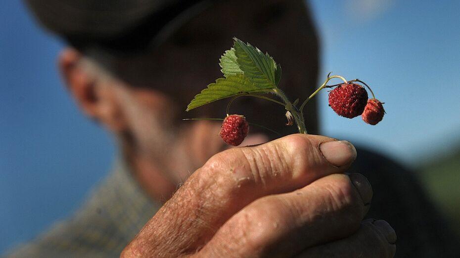 Жителям Воронежской области незаконно выписали штрафы за сбор грибов и ягод