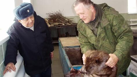 Василий Песков приехал в Воронеж, чтобы увидеть новорожденного бобренка