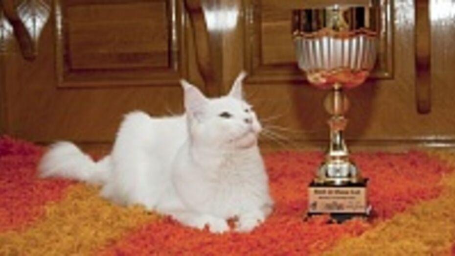 Лискинский мейн-кун вошел в топ лучших котов мира