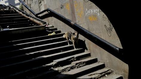Переход у остановки «Политехнический институт» в Воронеже отремонтируют весной-2018