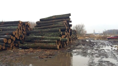 В Воронежской области 5 мужчин пойдут под суд за вырубку дубов на 38 млн рублей