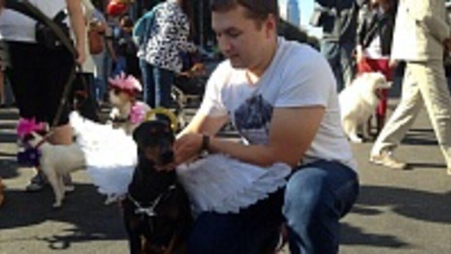 По центру Воронежа прошли собаки-ангелы, медведь на роликах и рыцарь на коне