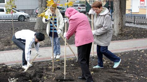 В Воронеже начался период осеннего озеленения