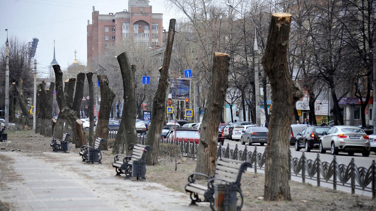 На эстетику нет средств. Почему деревья в Воронеже выглядят как столбы