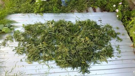 Житель Воронежской области вырастил марихуану на берегу Дона