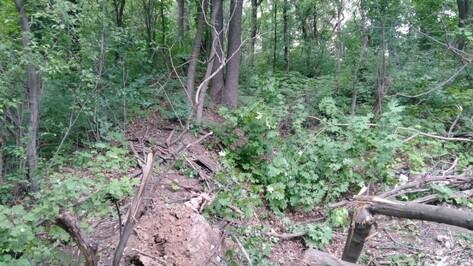 В воронежском парке «Динамо» нашли тело пропавшей студентки