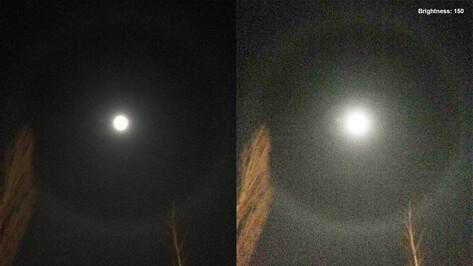 В Сети опубликовали фотографии гало вокруг Луны в Воронеже