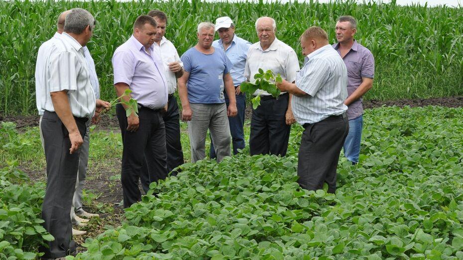 Репьевские аграрии провели объезд полей