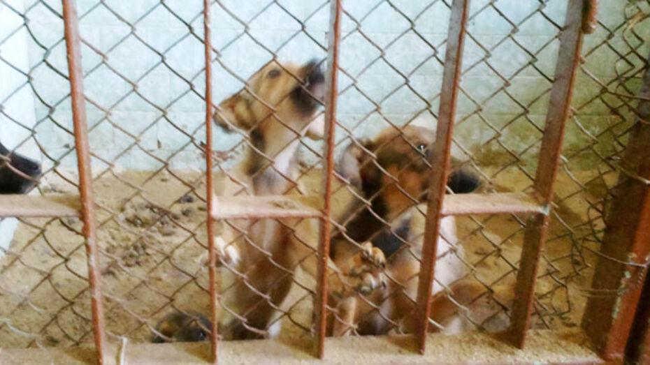 ВГАУ не хочет отвечать на обвинения в издевательствах над животными