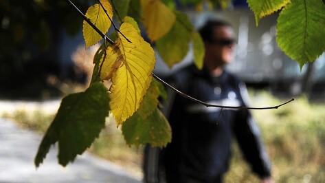 Погода в Воронеже вернется к климатической норме к концу недели