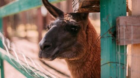 В Воронеже изменился режим работы зоопитомника «Червленый яр»