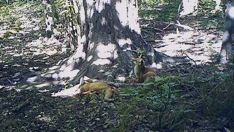 Воронежский заповедник опубликовал видео с лесных камер