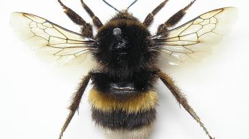 В Воронежском заповеднике обнаружили 12 новых видов насекомых
