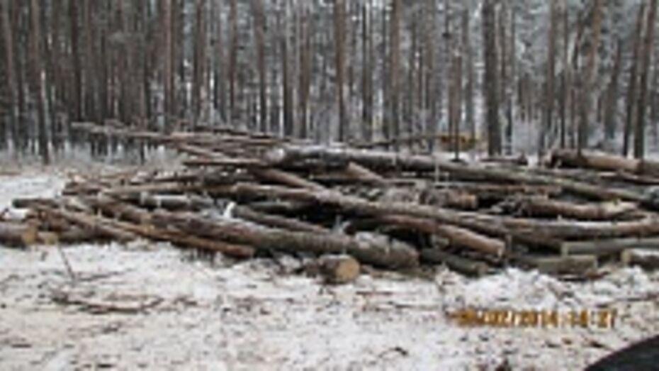 В Воронеже лесники начали очищать лесополосы вдоль трасс