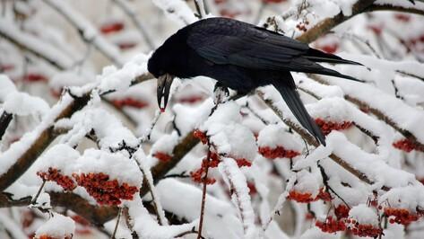 Рабочая неделя принесет Воронежу похолодание и снег