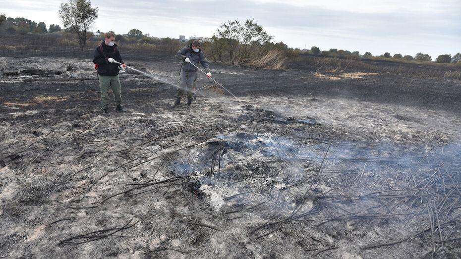 Разросшийся до 105 га пожар потушили в Воронежской области